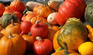 Nice-pumpkin-collection-2-13dede-sxc