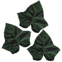 Ivy Cheese Leaves